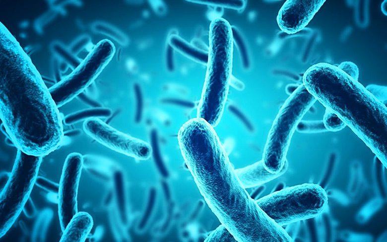Bacteria Samples