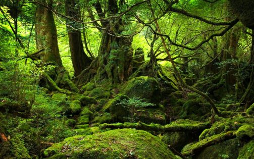 Pollution Damages Europe Trees