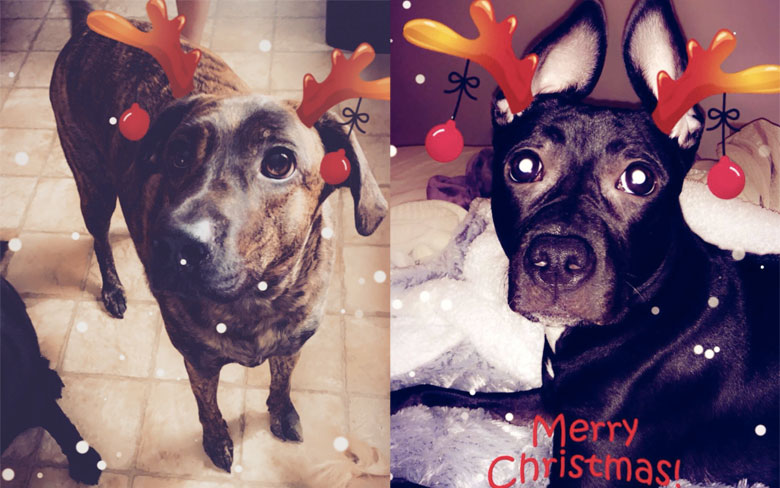 Snapchat App Gets New Lenses Specifically for Dogs