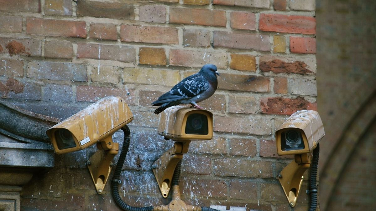 A Pigeon Sitting On A Camera