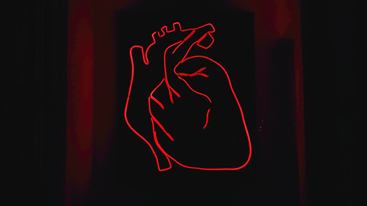 Human Heart Scanning