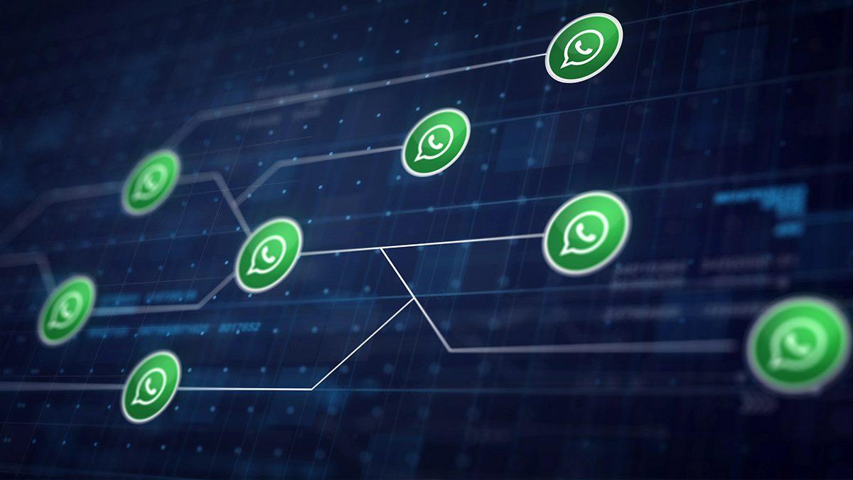 WhatsApp In A Netwrok