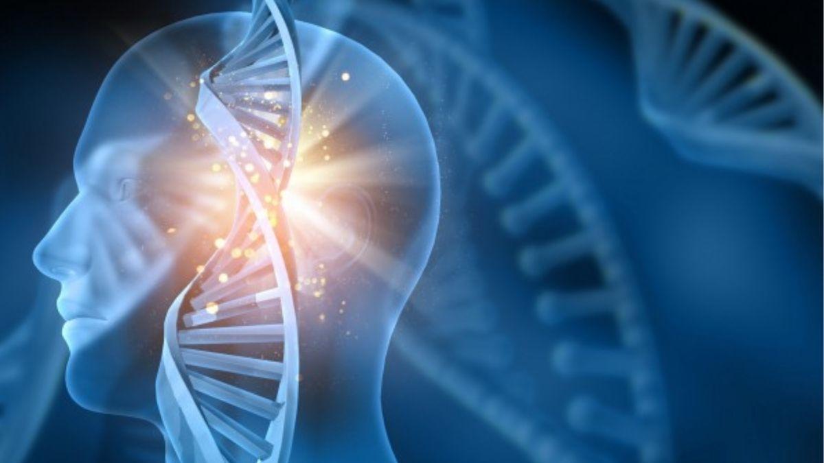 Genes In A Human Body