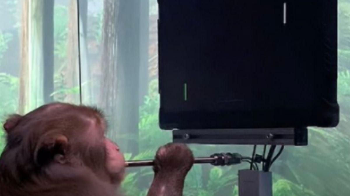 Monkey Plays Pong