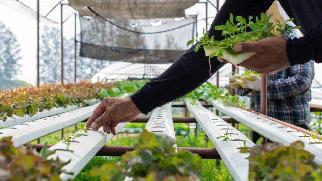 Verticle Farming